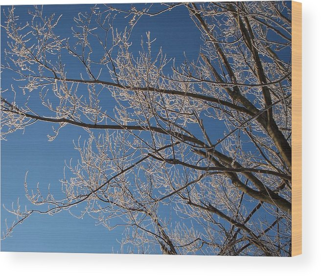 Branches Wood Print featuring the photograph Ice Storm Branches by Michelle Miron-Rebbe