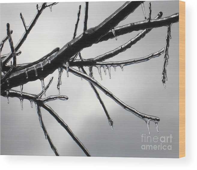 Winter Wood Print featuring the photograph Iced Tree by Ann Horn