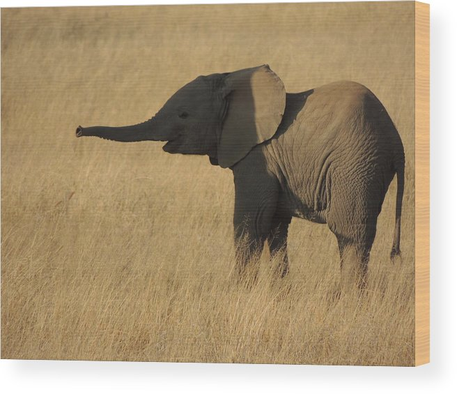 Elephant Wood Print featuring the photograph In The Shadow Of Her Mother by Lauren Armstrong