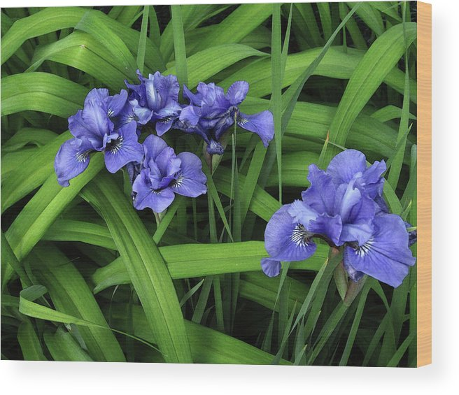 Iris Wood Print featuring the photograph Irises by Mary Bedy