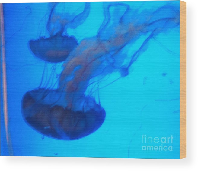 This Picture Was Shot At The Denver Aquarium Of This Colorful Jelly Fish. Wood Print featuring the photograph Jelly Fish by Greg Davis