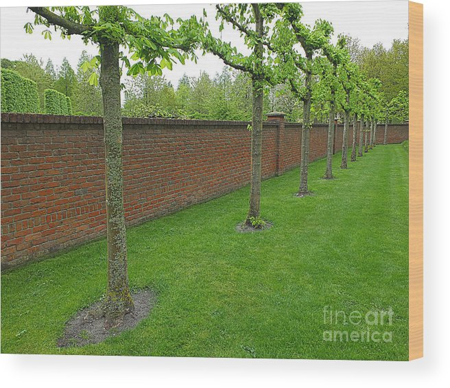 Keukenhof Gardens Wood Print featuring the photograph Keukenhof Gardens 11 by Mike Nellums