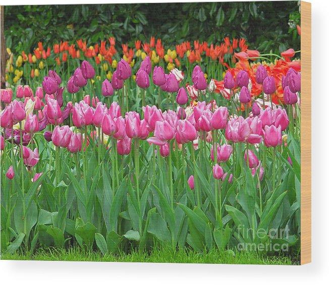 Keukenhof Gardens Wood Print featuring the photograph Keukenhof Gardens 14 by Mike Nellums