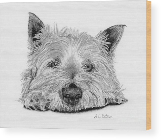Yorkie Wood Print featuring the drawing Little Dog by Sarah Batalka