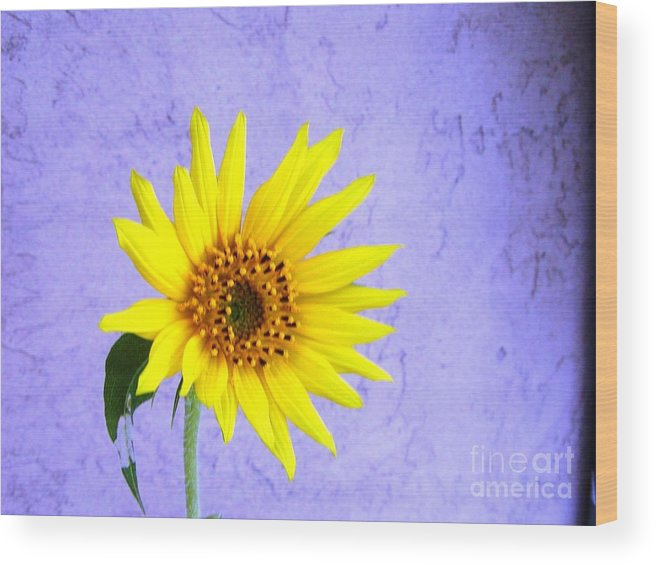 Daisy Wood Print featuring the photograph Lone Yellow Daisy by Jussta Jussta
