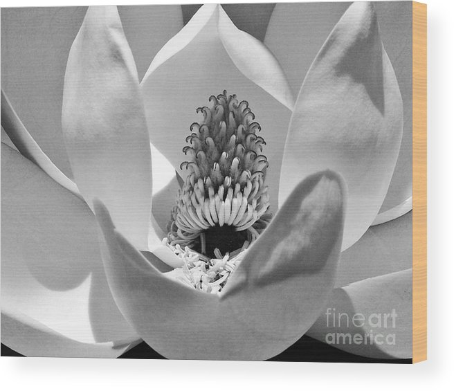 Landscape Wood Print featuring the photograph Magnolia Bloom 3bw by Earl Johnson