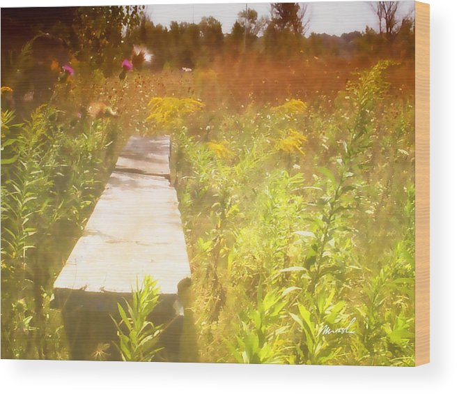 baseball Field Wood Print featuring the photograph Meditation In Sunlight 1 by The Art of Marsha Charlebois