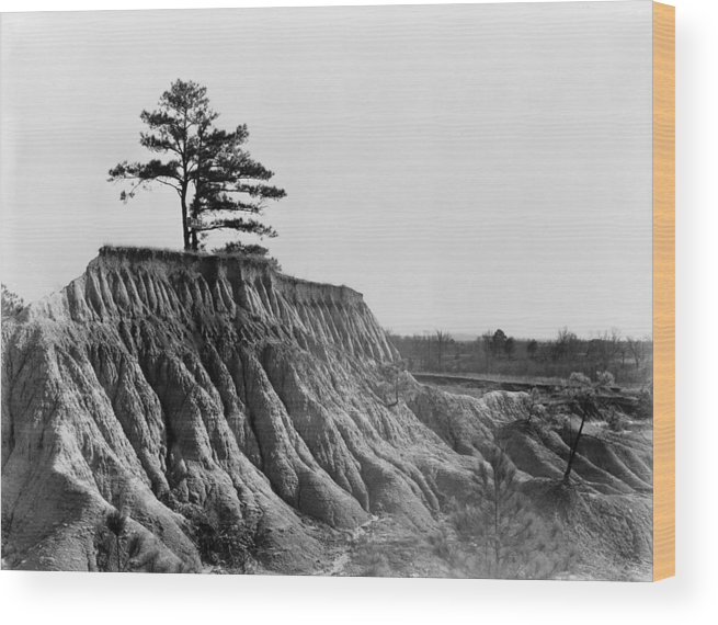 1936 Wood Print featuring the photograph Mississippi Erosion, 1936 by Granger