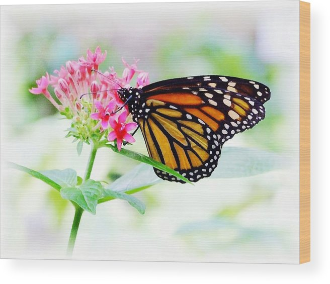 Butterfly Wood Print featuring the photograph Monarch Beauty by Jim Darnall