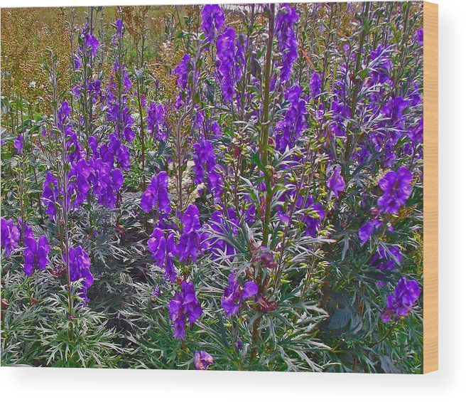 Monkshood Rocky Harbour In Gros Morne Np Wood Print featuring the photograph Monkshood In Rocky Harbour-nl by Ruth Hager