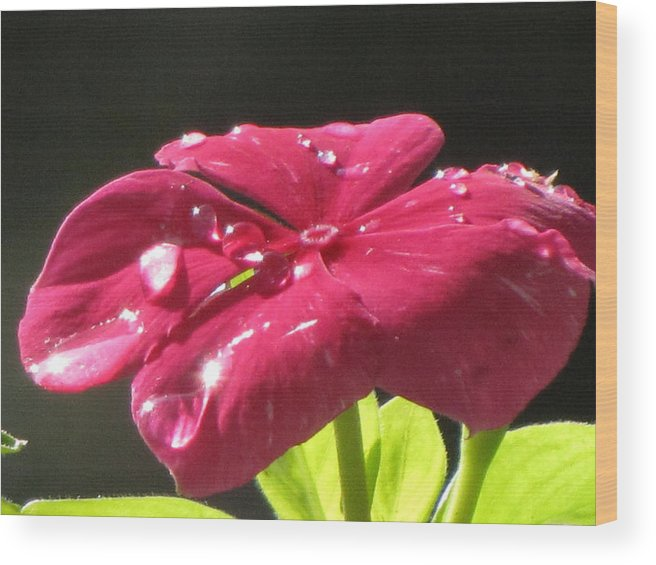 Morning Wood Print featuring the photograph Morning Dew Impatient by John Will
