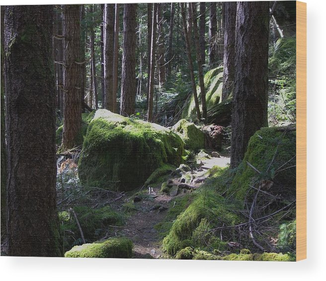 Moss Wood Print featuring the photograph Mossy Boulders by Will LaVigne