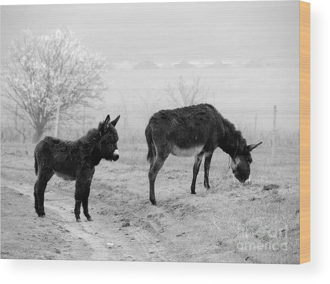 Donkey Wood Print featuring the photograph Mother And Child by Gabriela Insuratelu