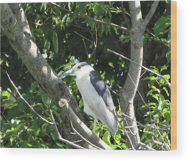Blue Wood Print featuring the photograph My Blue Heron by John Will