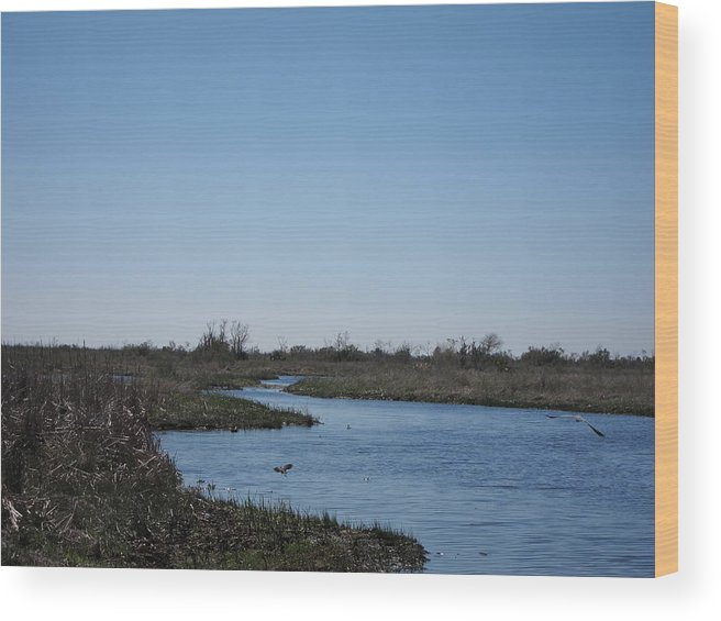 New Wood Print featuring the photograph New Orleans - Swamp Boat Ride - 1212107 by DC Photographer