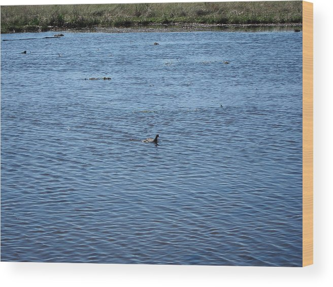 New Wood Print featuring the photograph New Orleans - Swamp Boat Ride - 1212108 by DC Photographer