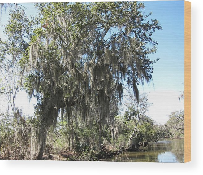 New Wood Print featuring the photograph New Orleans - Swamp Boat Ride - 1212129 by DC Photographer