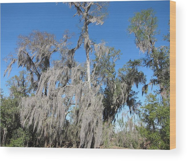 New Wood Print featuring the photograph New Orleans - Swamp Boat Ride - 1212138 by DC Photographer