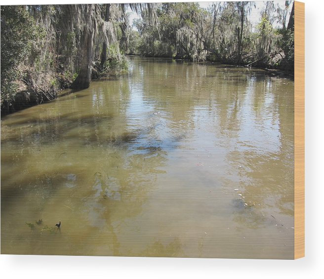 New Wood Print featuring the photograph New Orleans - Swamp Boat Ride - 1212143 by DC Photographer