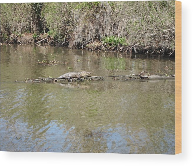 New Wood Print featuring the photograph New Orleans - Swamp Boat Ride - 1212159 by DC Photographer