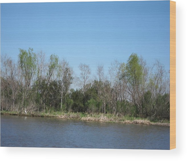 New Wood Print featuring the photograph New Orleans - Swamp Boat Ride - 1212161 by DC Photographer
