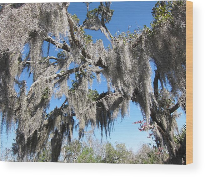 New Wood Print featuring the photograph New Orleans - Swamp Boat Ride - 121238 by DC Photographer