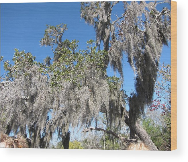 New Wood Print featuring the photograph New Orleans - Swamp Boat Ride - 121239 by DC Photographer