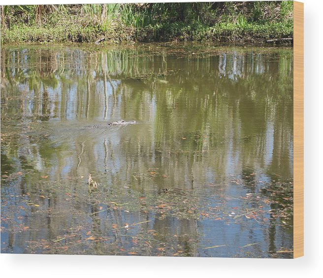 New Wood Print featuring the photograph New Orleans - Swamp Boat Ride - 121250 by DC Photographer