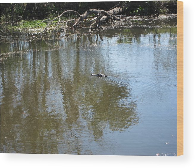 New Wood Print featuring the photograph New Orleans - Swamp Boat Ride - 121264 by DC Photographer