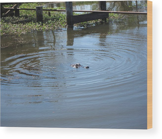 New Wood Print featuring the photograph New Orleans - Swamp Boat Ride - 121276 by DC Photographer