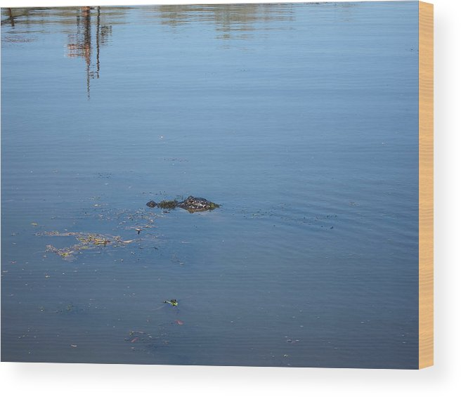 New Wood Print featuring the photograph New Orleans - Swamp Boat Ride - 121285 by DC Photographer