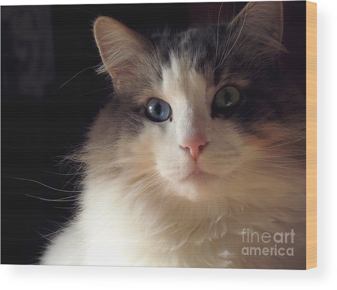 Cat Wood Print featuring the photograph Nimbus In The New Year by Lili Feinstein