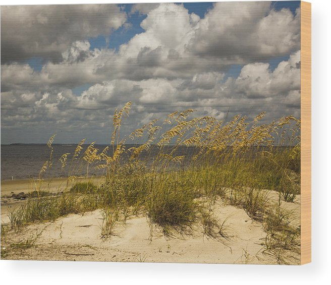 Sea Oats Wood Print featuring the photograph Oat And Dune Vista by Barbara Northrup