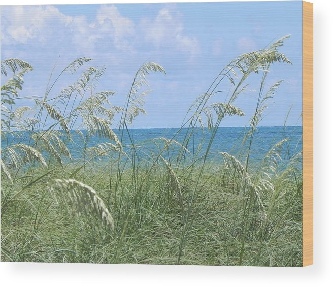 Ocean Wood Print featuring the photograph Ocean And Oats by Cynthia N Couch