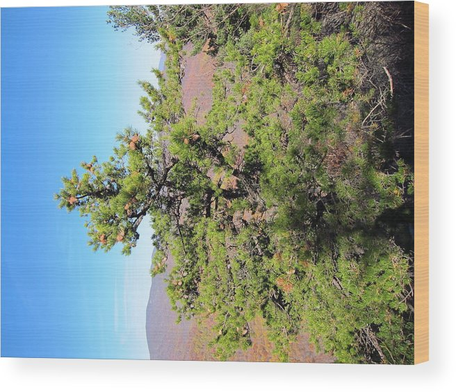 Old Wood Print featuring the photograph Old Rag Hiking Trail - 121225 by DC Photographer