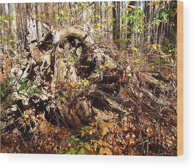 Old Wood Print featuring the photograph Old Rag Hiking Trail - 12123 by DC Photographer