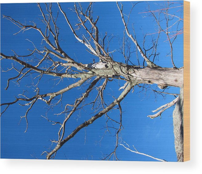Old Wood Print featuring the photograph Old Rag Hiking Trail - 121241 by DC Photographer