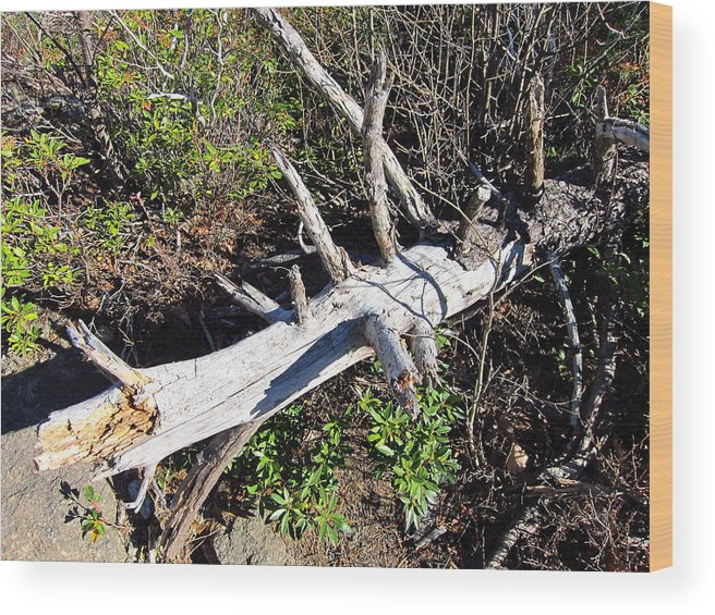 Old Wood Print featuring the photograph Old Rag Hiking Trail - 121243 by DC Photographer