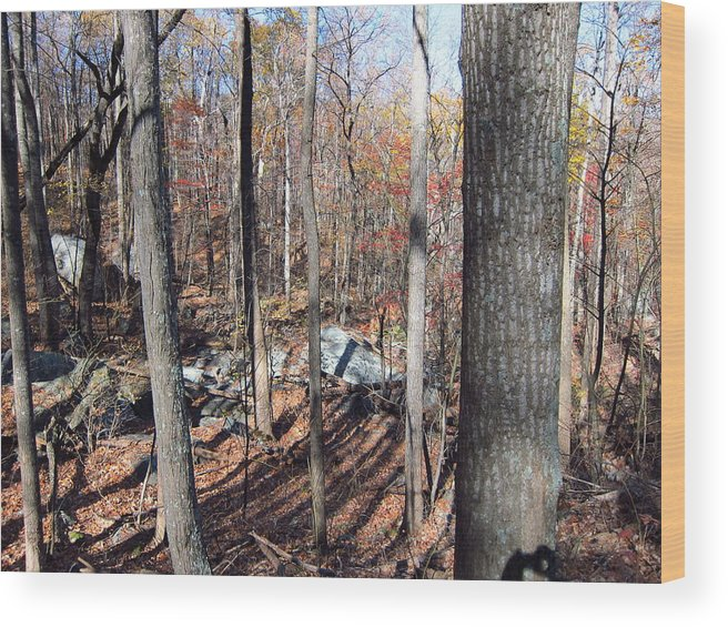 Old Wood Print featuring the photograph Old Rag Hiking Trail - 12126 by DC Photographer