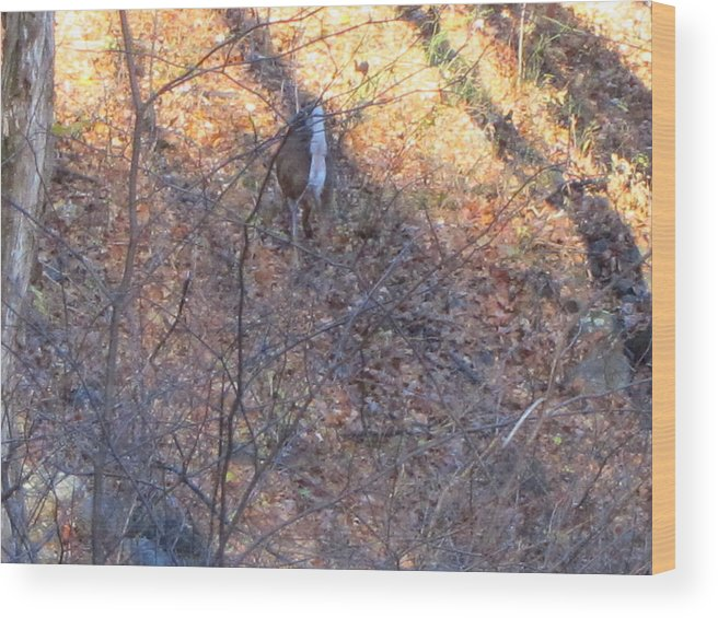 Old Wood Print featuring the photograph Old Rag Hiking Trail - 121264 by DC Photographer