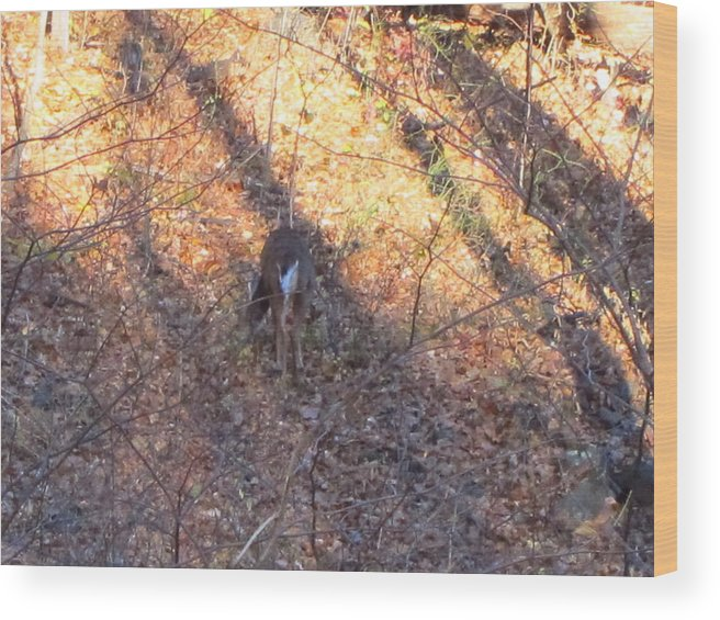 Old Wood Print featuring the photograph Old Rag Hiking Trail - 121265 by DC Photographer