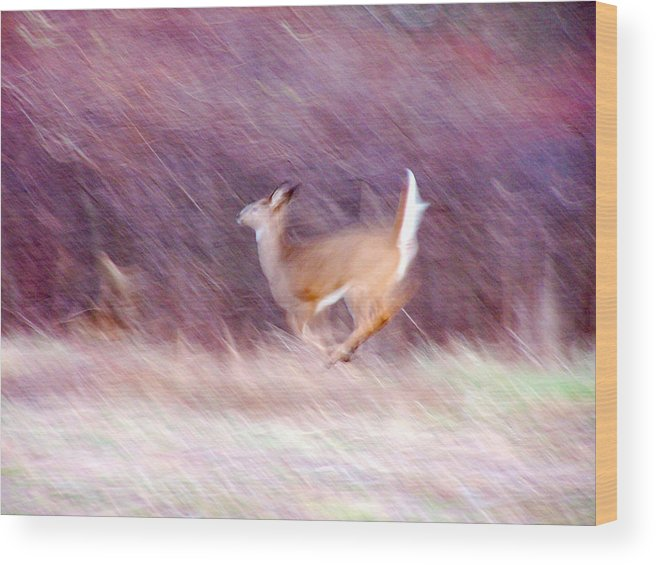 Deer Wood Print featuring the photograph On The Run by Tracy Winter
