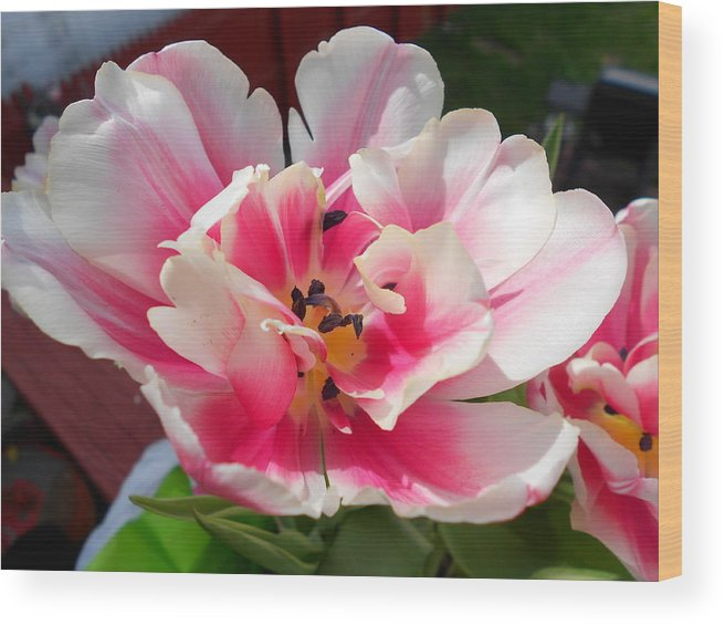 Floral Wood Print featuring the photograph Open Wide by DHarm Photography