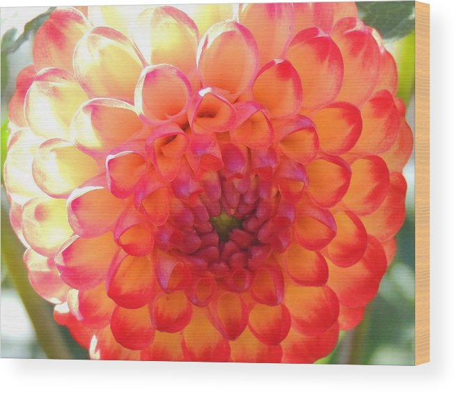 Nature Wood Print featuring the photograph Orange Center by Lucy Howard