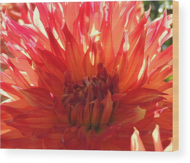Nature Wood Print featuring the photograph Orange Day by Lucy Howard