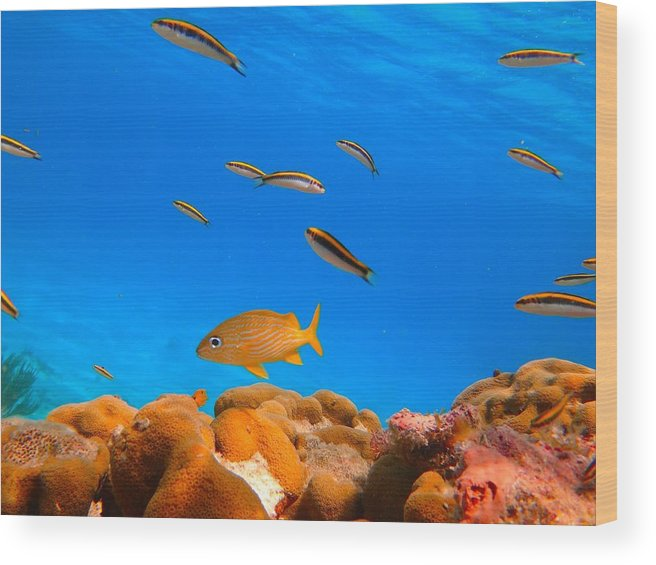Water Wood Print featuring the photograph Orange Fish by Michael Urbain