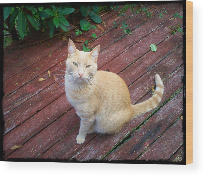 Cat Wood Print featuring the photograph Orange Tabby On Porch by Absinthe Art By Michelle LeAnn Scott