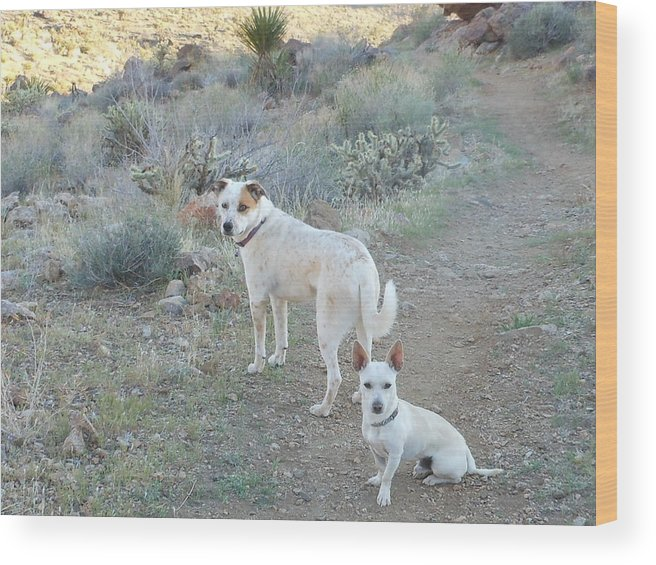 Dog Wood Print featuring the photograph Paco And Mocha by James Welch