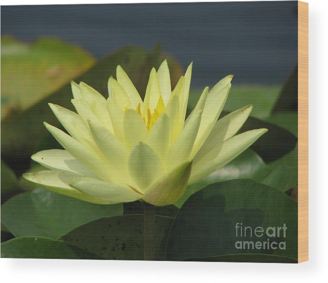 Lillies Wood Print featuring the photograph Peace by Amanda Barcon