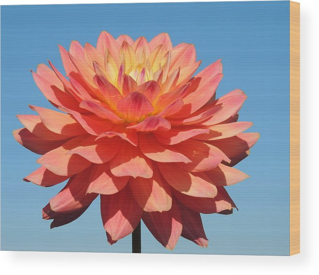 Nature Wood Print featuring the photograph Pink Petals In The Sky by Lucy Howard